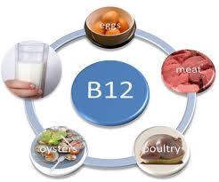 sources vitamin b12