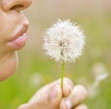 health benefits dandelion