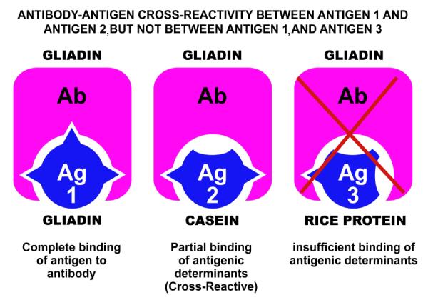 gluten cross reactivity