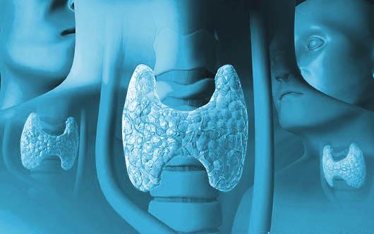 healthy thyroid gland