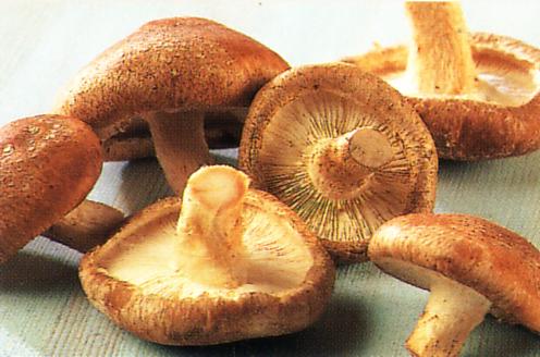 shiitake_mushrooms