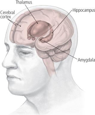 depression brain resized 600